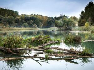 ¿En qué consiste el Programa de las Naciones Unidas para el Medio Ambiente?
